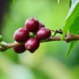 Próximamente Expo Coffee Media 2021